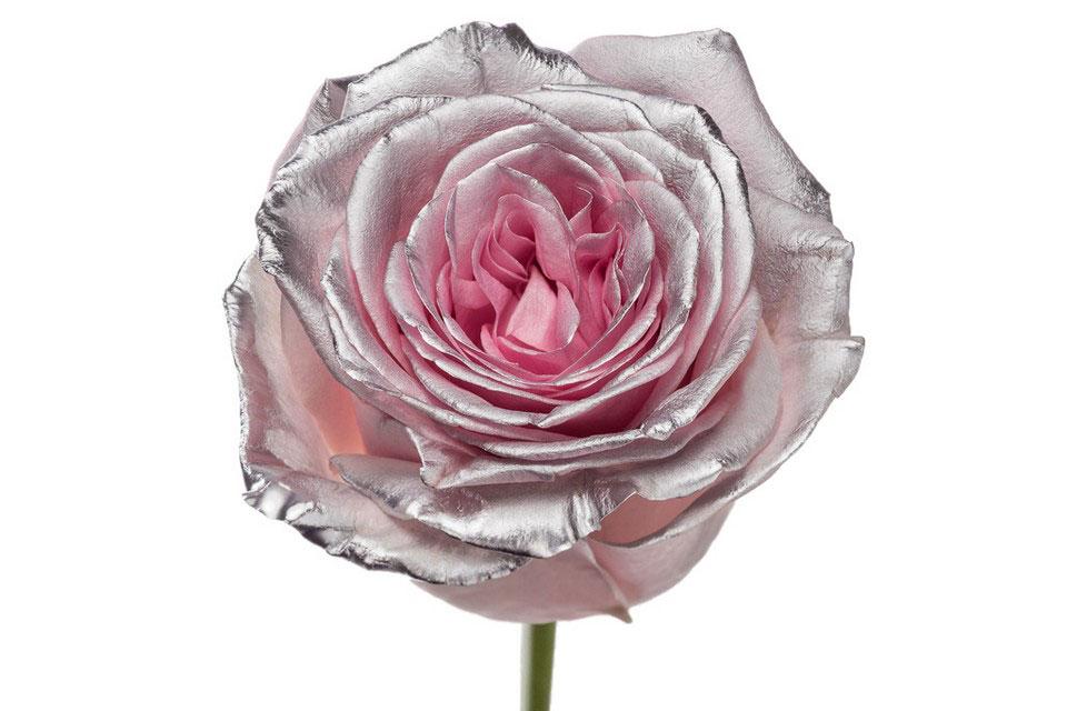 P° 2185 Pink Blush Silver Glamour