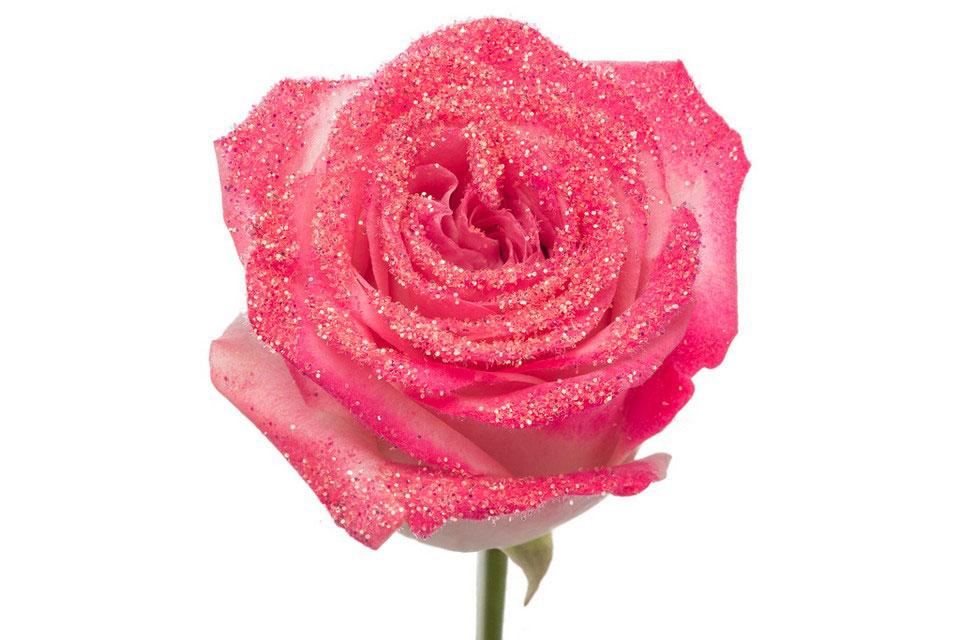 P° 2325 Pink Diamond Pink