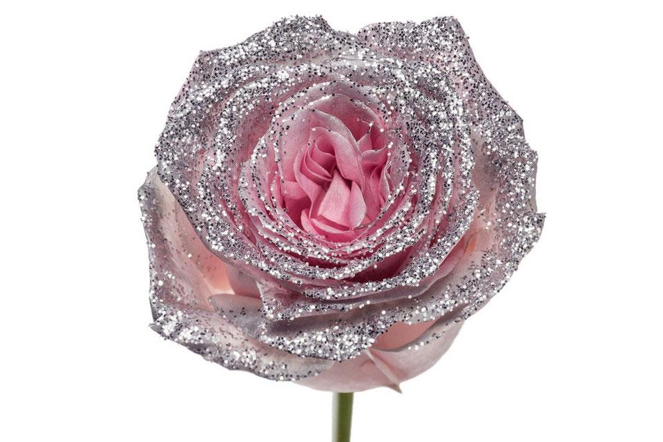 P° 2340 Pink Diamond Silver