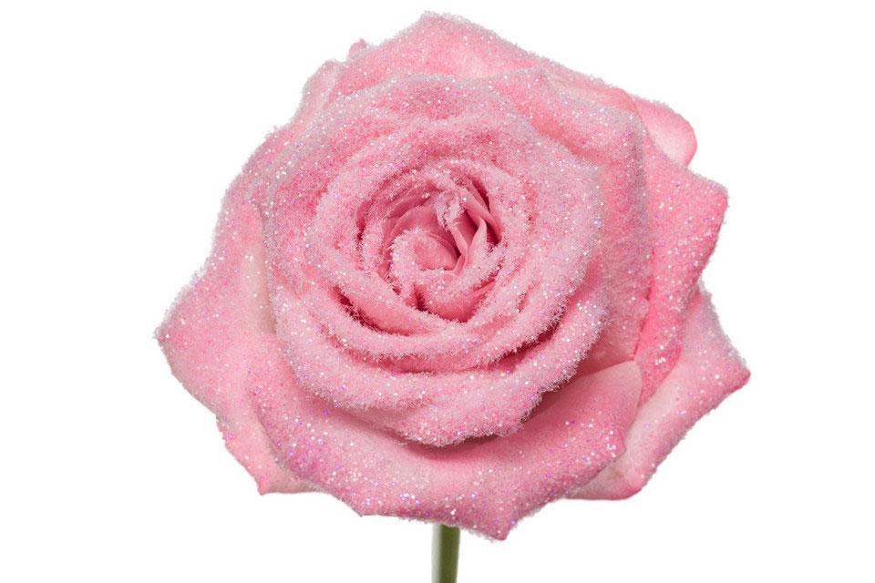 P° 2370 Pink Velvet Diamond