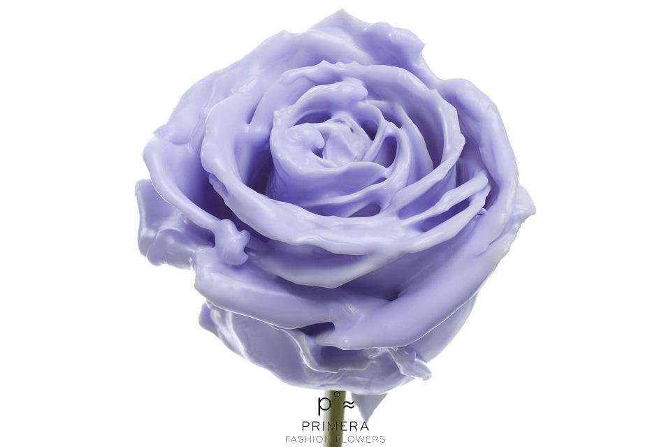 P° 372 Lavender