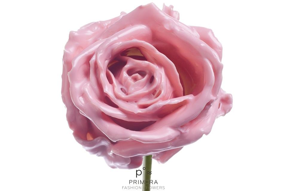 P° 442 Pink Soft