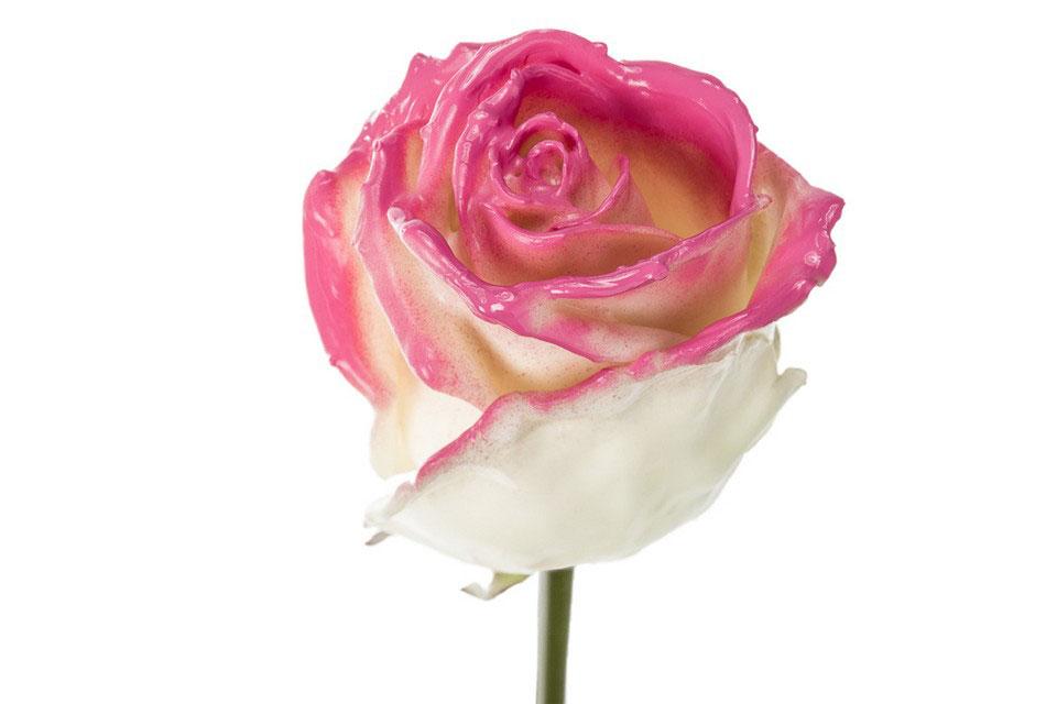 P° 728 White Blush Pink