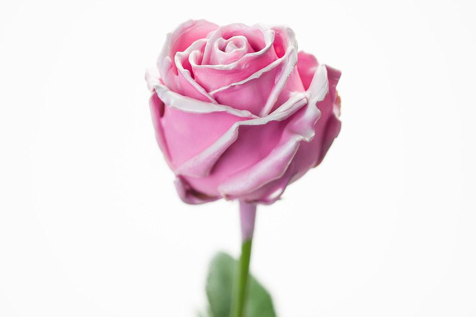 P° 470 Pink Blush White