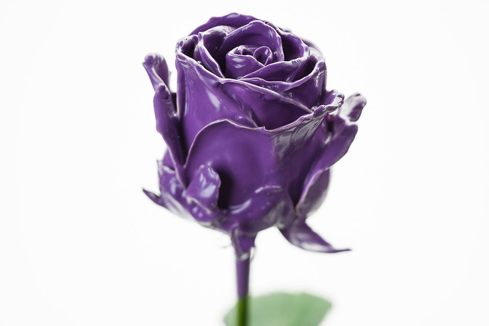 P° 500 Purple
