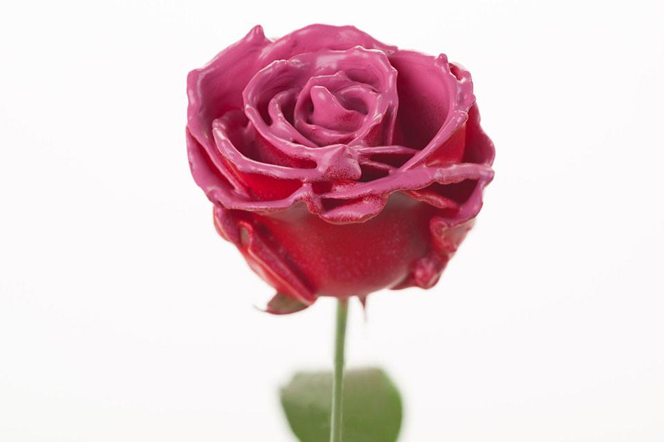 P° 530 Red Blush Pink