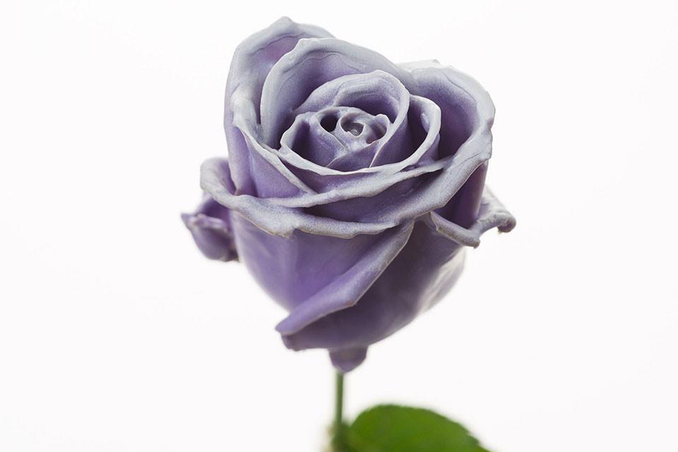 P° 630 Violet Blush White