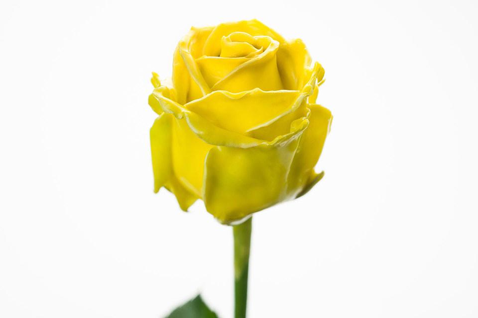 P° 820 Yellow